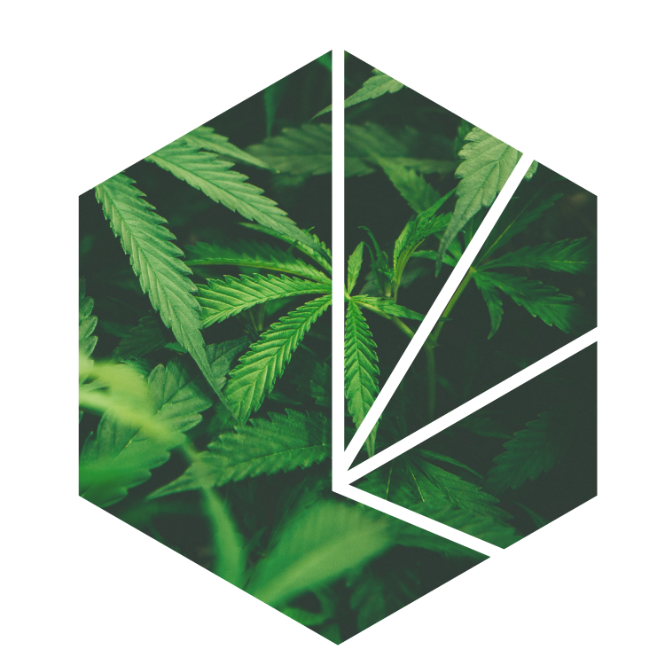 CannaSales Cannabis